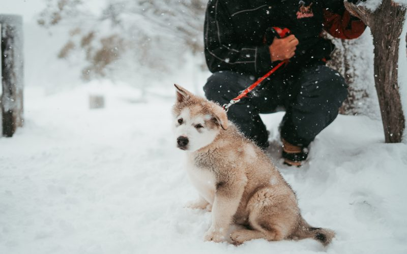 How To Know When It's Too Cold for My Dog?