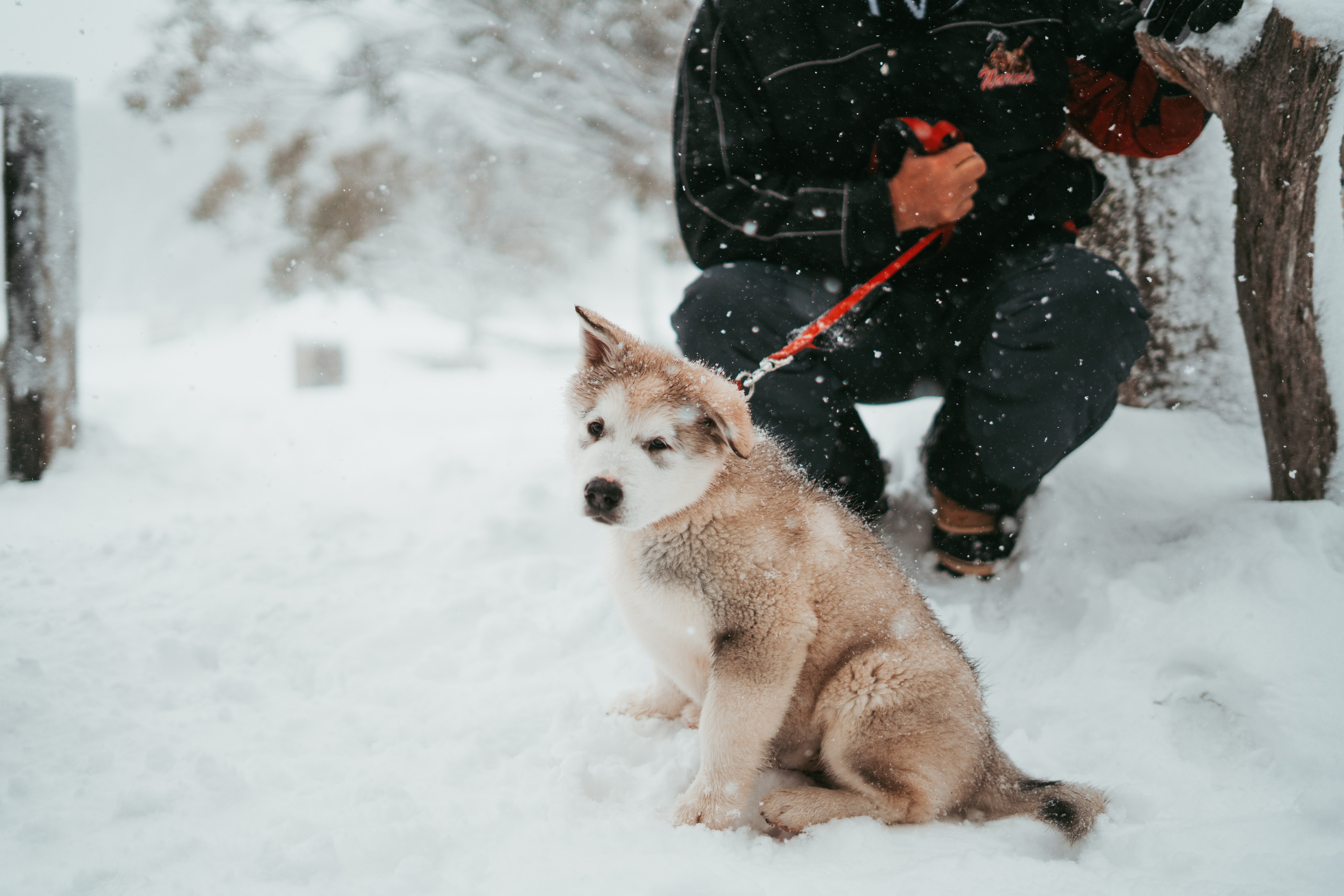 How to know when it's too cold for your dog