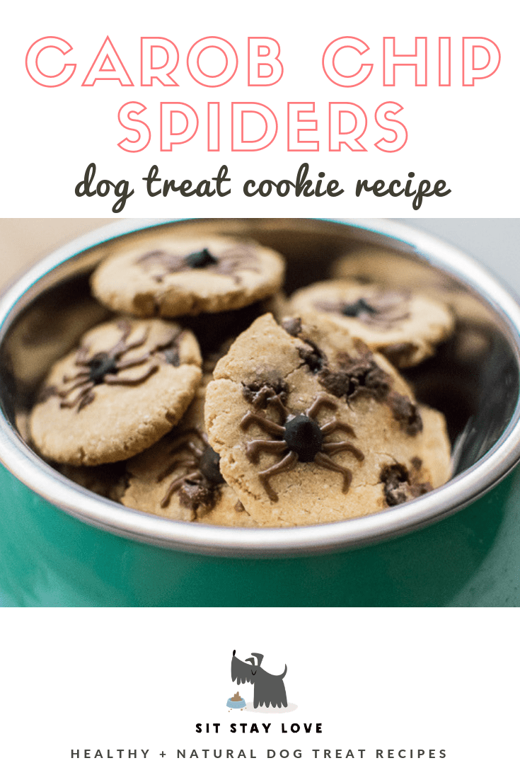 Spider carob chip cookies for dogs in a dog bowl